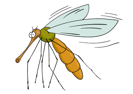 Drawing gnat isolated on the white  Vector