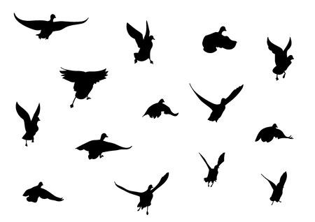 アヒル: 鳥の飛行の黒いシルエット
