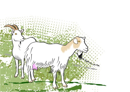 goats on the green background Vector