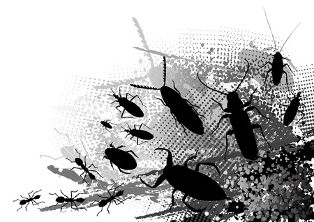 insect on the dark background Vector