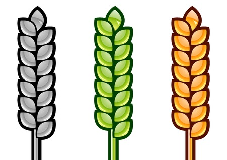 three color corn isolated on the white Vector