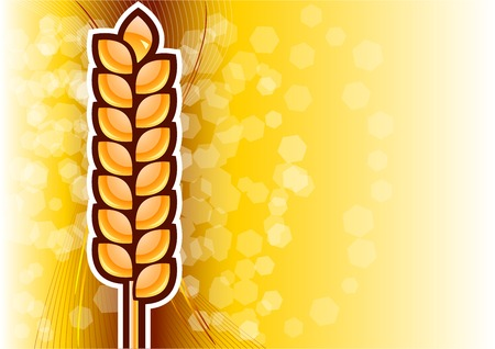 gold corn on the background Vector