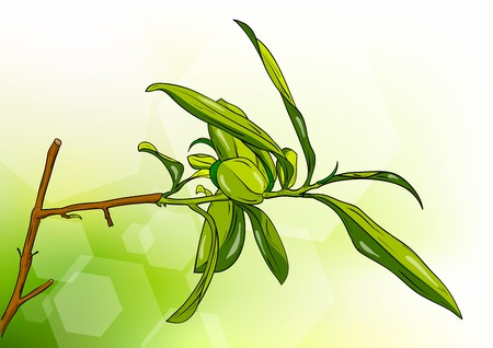 tea tree on the background Vector