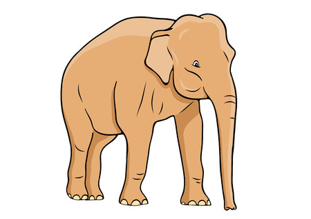 Elephant isolated on the white Stock Vector - 7755787