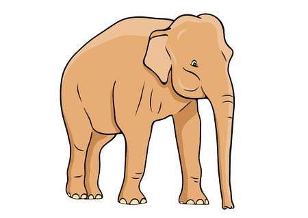 zoology: Elephant isolated on the white Illustration
