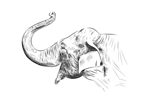 elefánt: sketch of elephant on the white