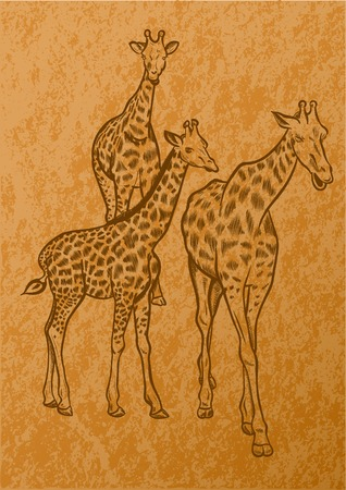 Giraffes on the light brown old paper Vector