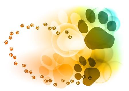 tigre blanc: Marque de pied sur un fond de couleur
