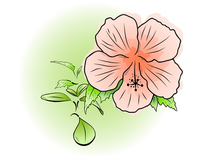 Pink flower on the green background Vector