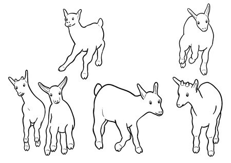 smiling goat: small goatling isolated on the white Illustration