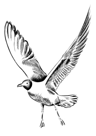 drawing seagull isolated on the wite