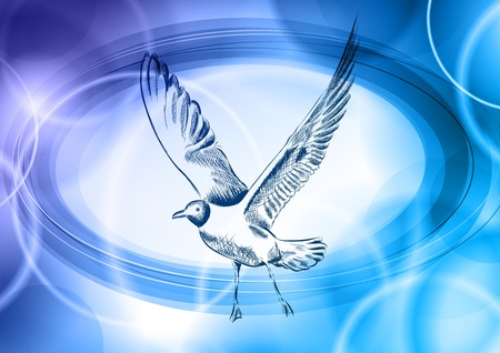 seagull on the blue background Vector