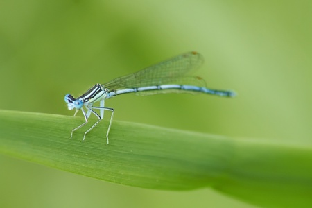 damselfly on the green photo