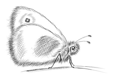 Schmetterling isoliert auf weiß Vektorgrafik