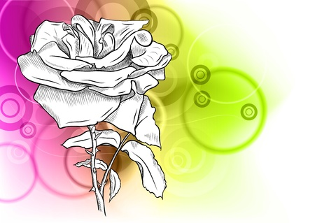 white rose on the abstract background Vector