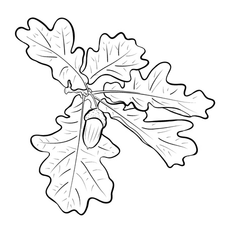 acorn with the oak branch Vector