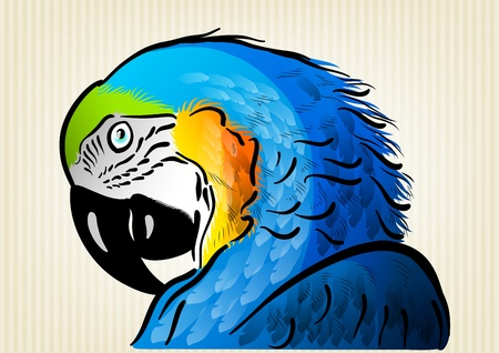 blue parrot on the background Vector