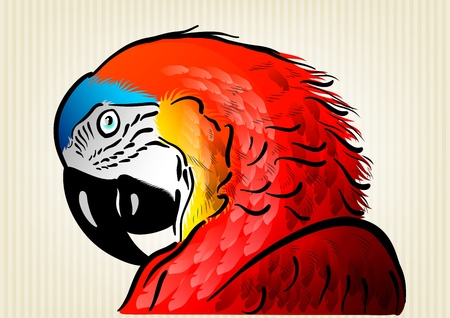 red parrot on the background Vector