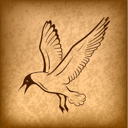 gull: flying bird on the background