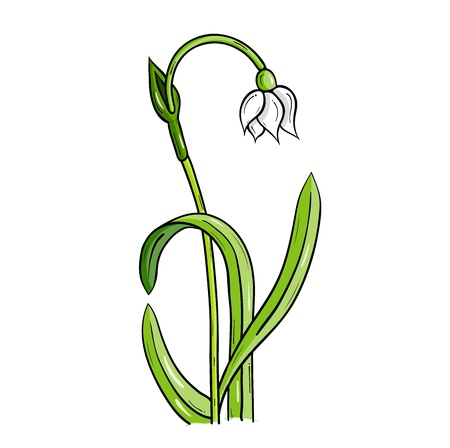 loddon lily isolated on the white Stock Vector - 11844914