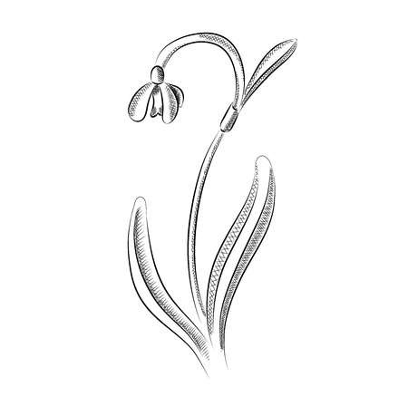 old pencil: snowdrop isolated on the white Illustration