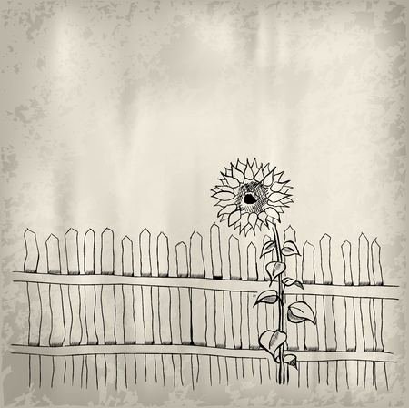 sunflower with fence on the background Vector