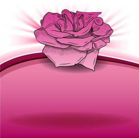 rose on the pink background Vector