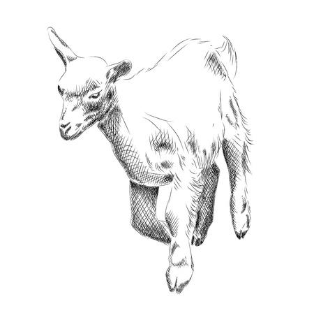 small goat isolated on the white Stock Vector - 12308480