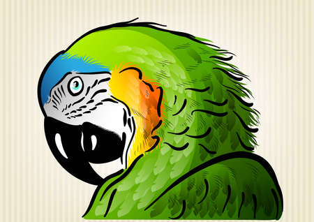 green parrot on the background Vector
