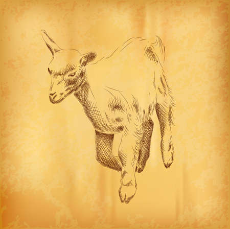 Small goat on the old paper Vector