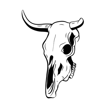 skull of the bull isolated on the white Vector