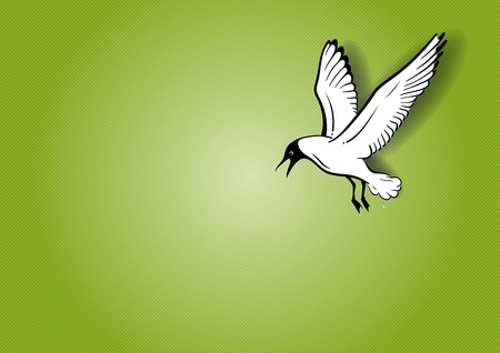 seabird: white seagull on the green background
