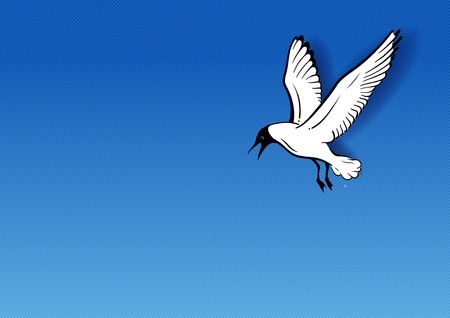 white seagull on the blue background