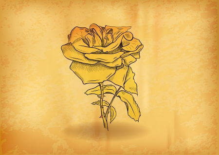 gold rose Vector