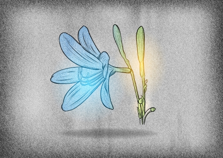 blue flower on the grey texture Vector
