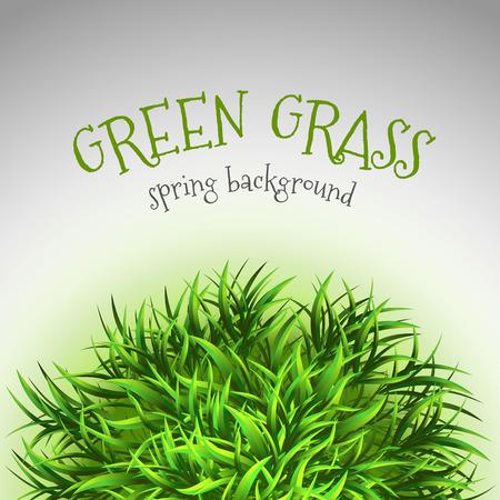 grass vector: Green grass. Vector design elements.