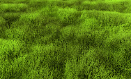 morass: Grass, lawn or swamp background. Render texture in excellent quality in any part.