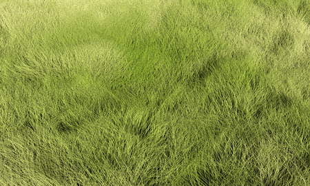 sward: Grass, lawn or meadow background. Render texture in excellent quality in any part.