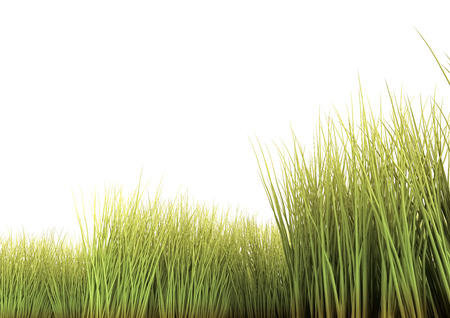 blades of grass: Long grass isolated on the white background. 3D render.