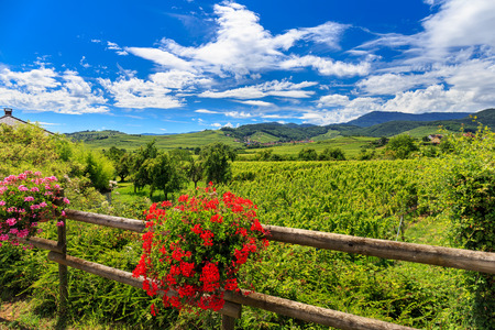 Alsace region of north east France. Landscape full of wine, flowers, sun, villages and forests.