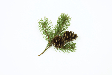 Cut pine branch with lush green needles and two large cones. Isolated on white. View from top.