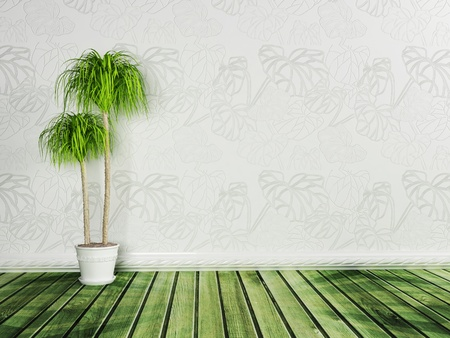 dracaena in the empty room, rendering photo