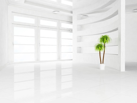 glass partition: green plant in the empty room