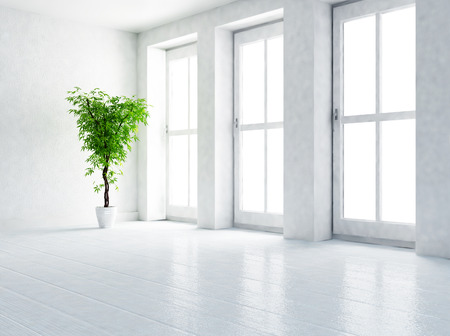 a green plant in the empty room