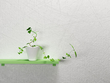 single shelf: a green plant on the shelf