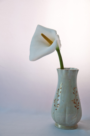 porcelain flower: white flower in porcelain vase Stock Photo