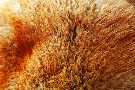 fluffy: red fluffy fur, natural, texture