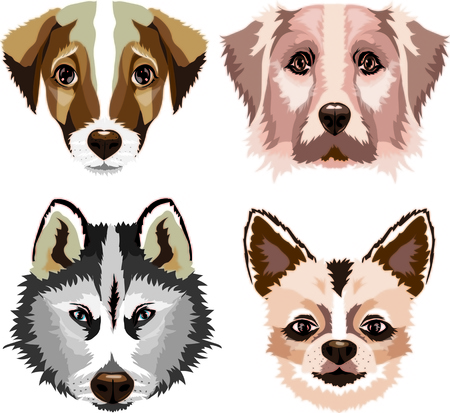 set of the dogs, vector graphics, cute dogs