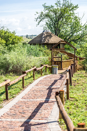 thatched: Pathway to thatched bird hide