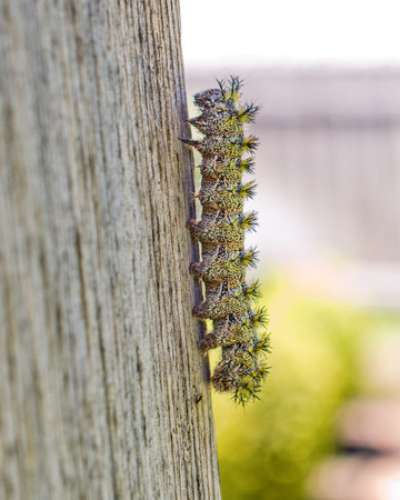 Fuzzy Caterpillar Reklamní fotografie